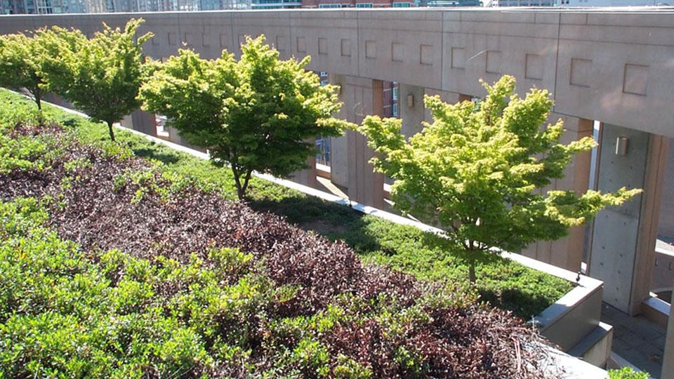 Installation de toit vert extensif - toiture verte - toit végétalisé  à Montréal / Toiture Laurentides